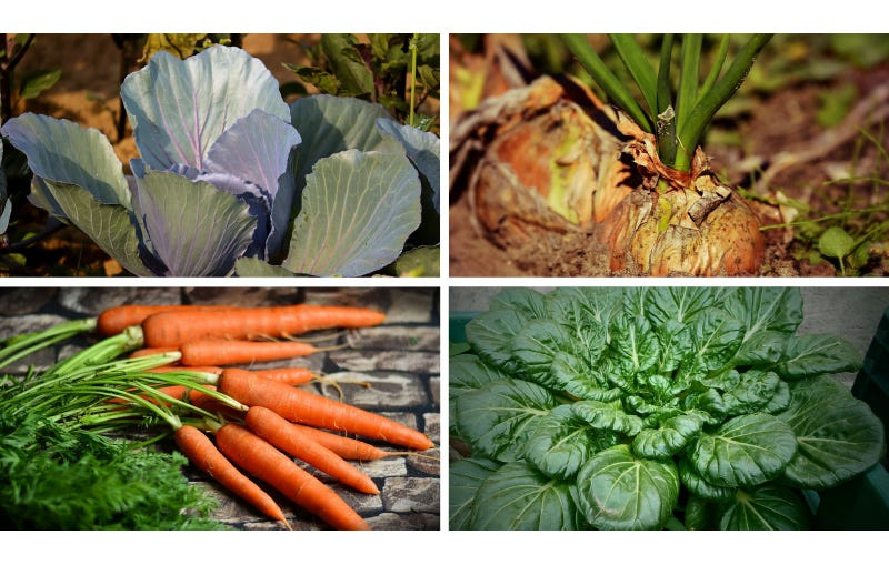 Winter vegtables to plant include, cabbage, carrots, onion, spinach
